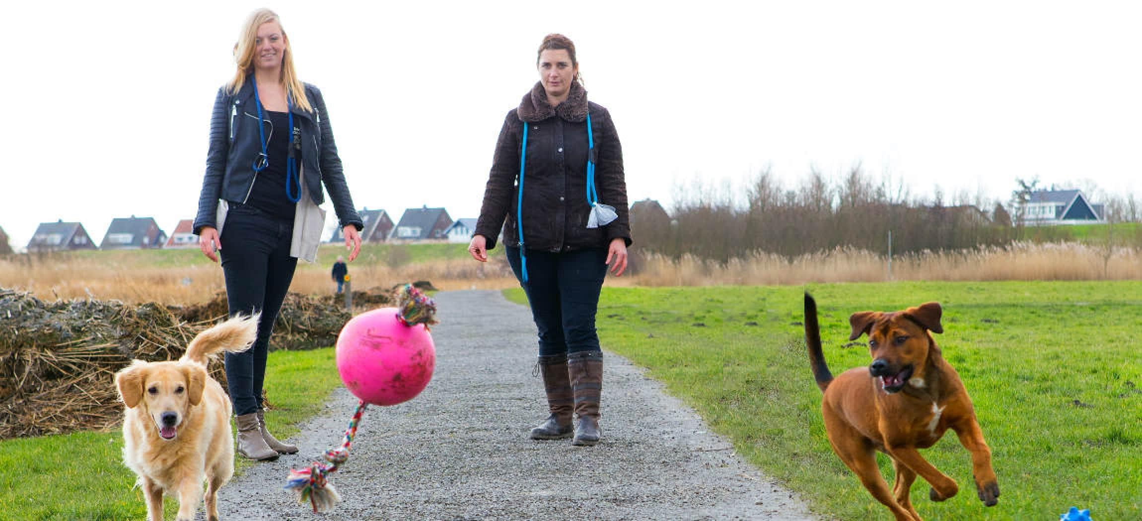 Twee honden rennen achter een roze bal aan met 2 vrouwen die de honden uitlaten