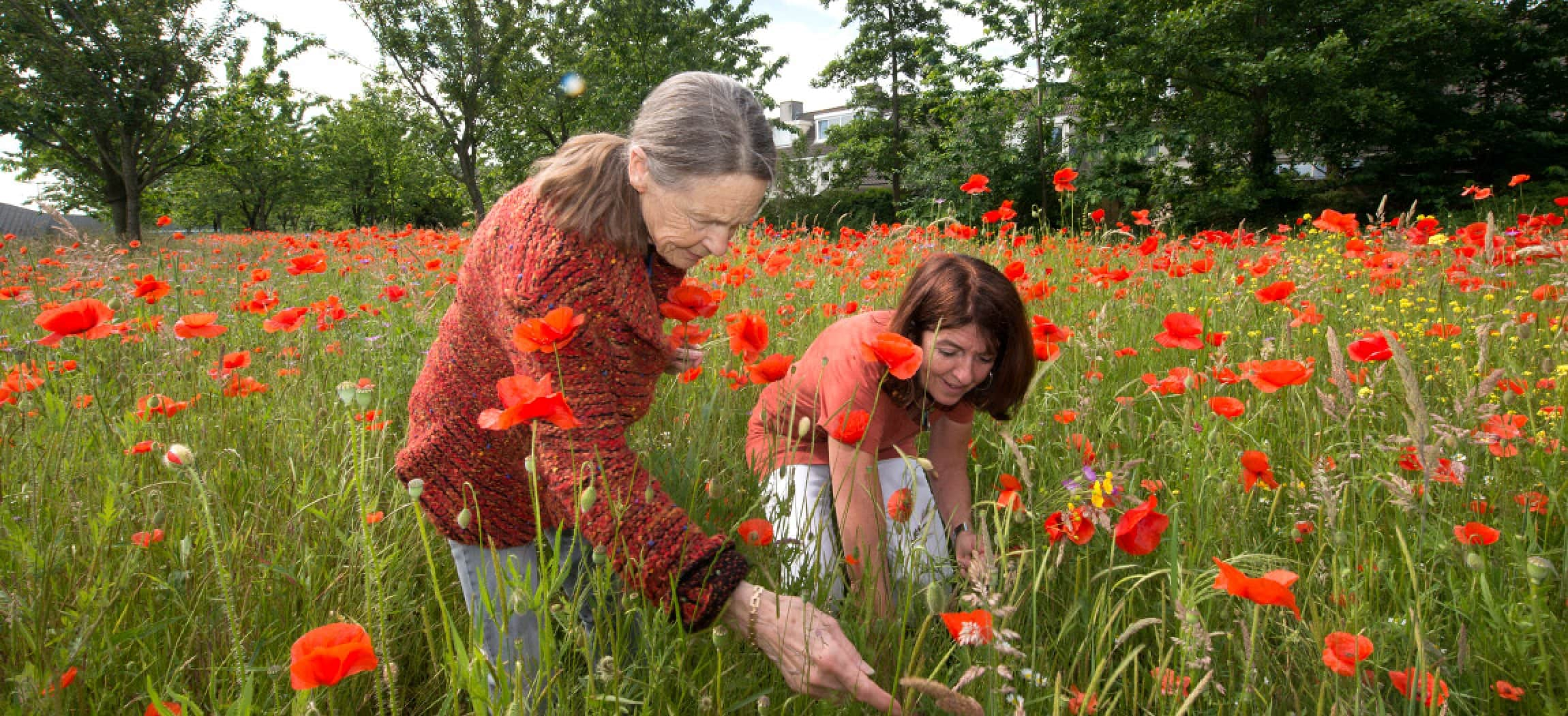 Klaprozen veld met 2 vrouwen in natuur