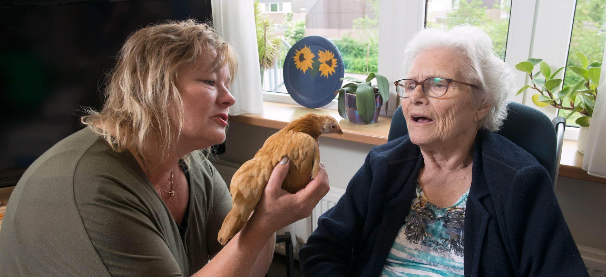 Oudere vrouw in verpleeghuis kijkt naar kip in handen van dierenbegeleider