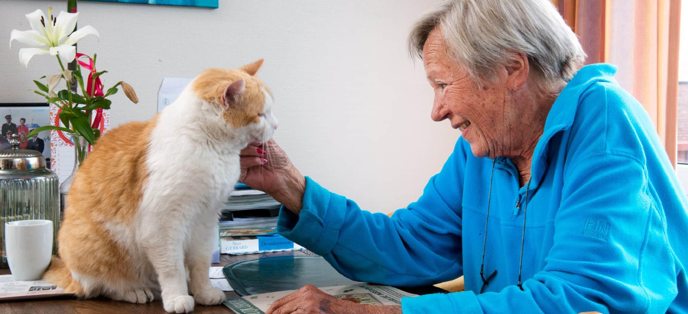 Mooie oudere blije vrouw aait haar oranje witte kat op tafel